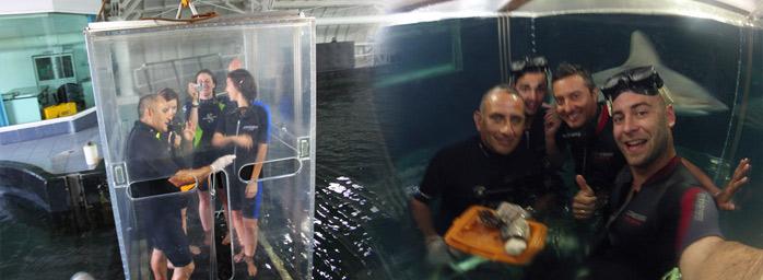 debajo-del-agua-con-tiburones-molaviajar