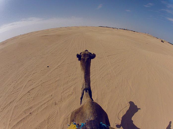 recorrido en camello tunez