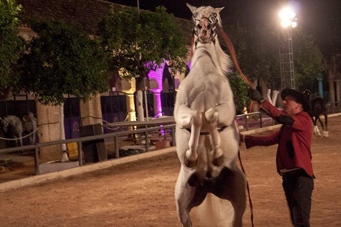 espectáculo caballos