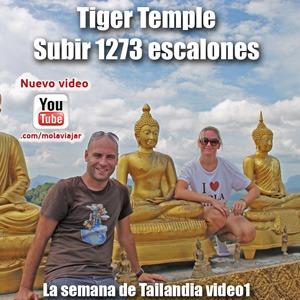Tiger Temple en Krabi Tailandia