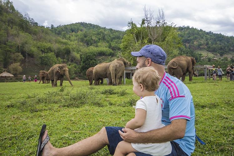 elefantes norte tailandia