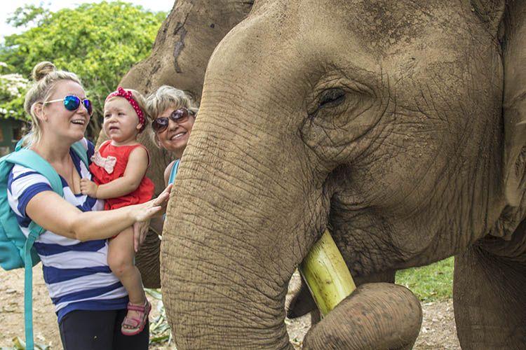 Elephant Nature Park Chiang Mai Tailandia