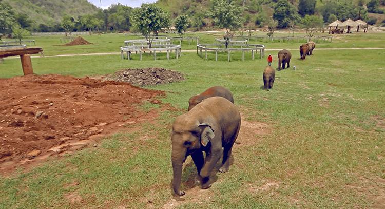 parque natural elefantes